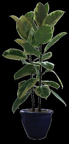 70 plantas y macetas en psd cosassencillas com for Imagenes de plantas en macetas
