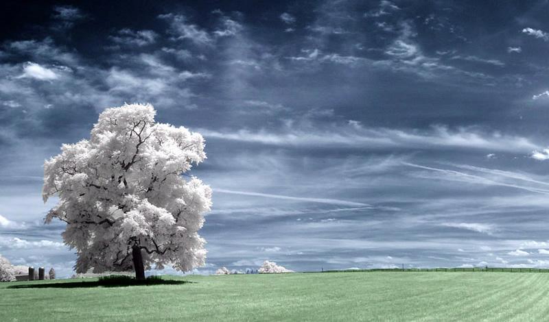 fotos-infrarrojas1