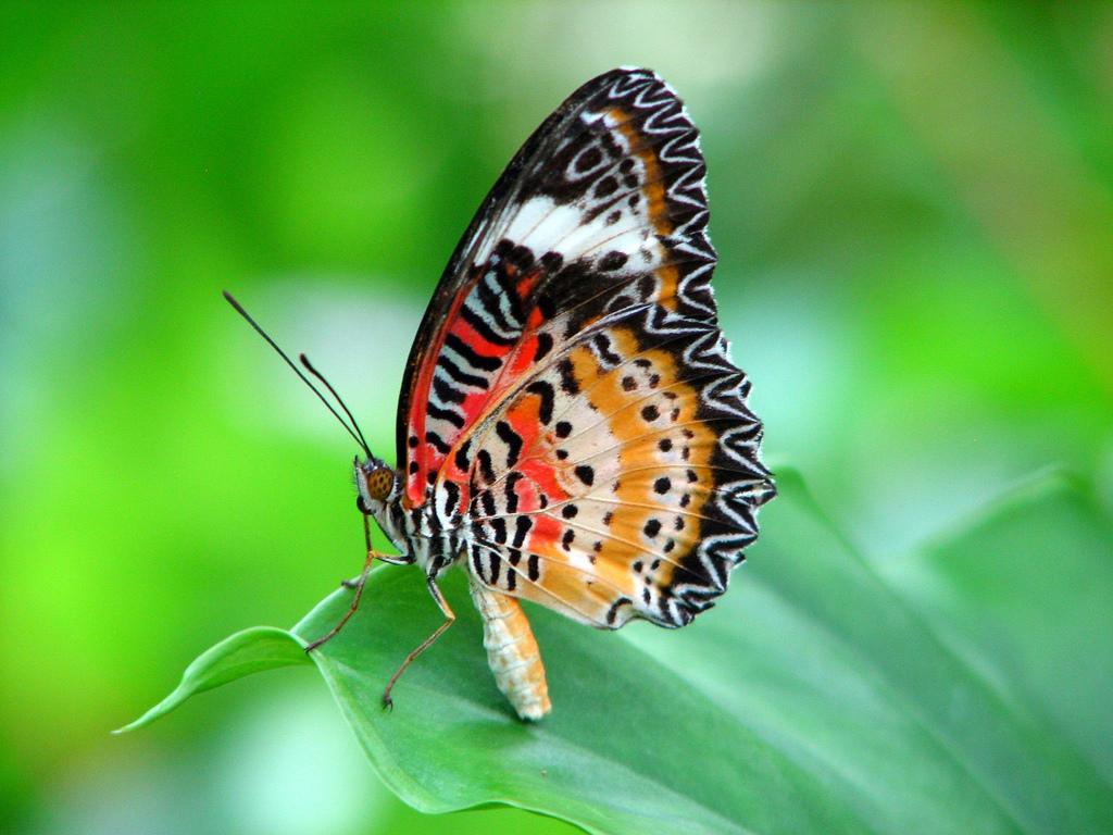 Más de 50 fotos de insectos con increíble colorido