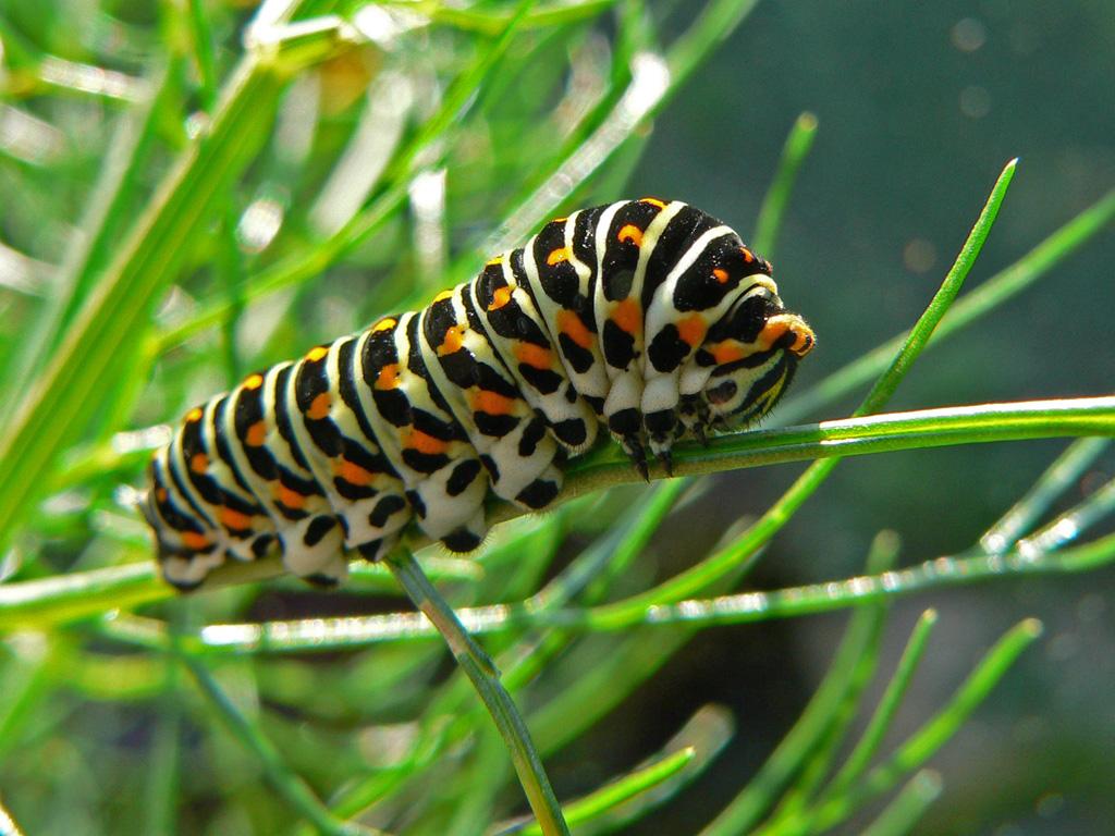 Fotos de insectos hd taringa - Insectos en casa fotos ...