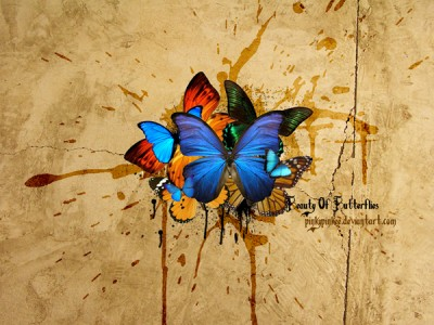 25-fondos-mariposas
