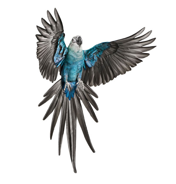 Andrew Zuckerman Sorprendentes Im 225 Genes De Aves