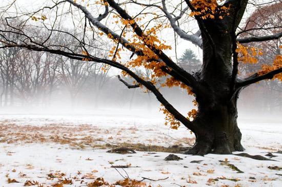 fotografia-invierno