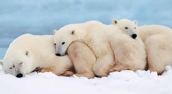 animales-nieve